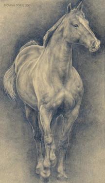 HORSE STUDY / ÉTUDE DE CHEVAL