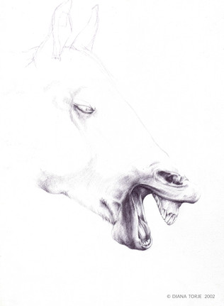 LAUGHING HORSE / LE CHEVAL QUI RIT