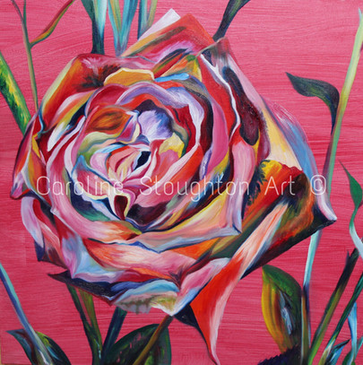 Rainbow Rose Red