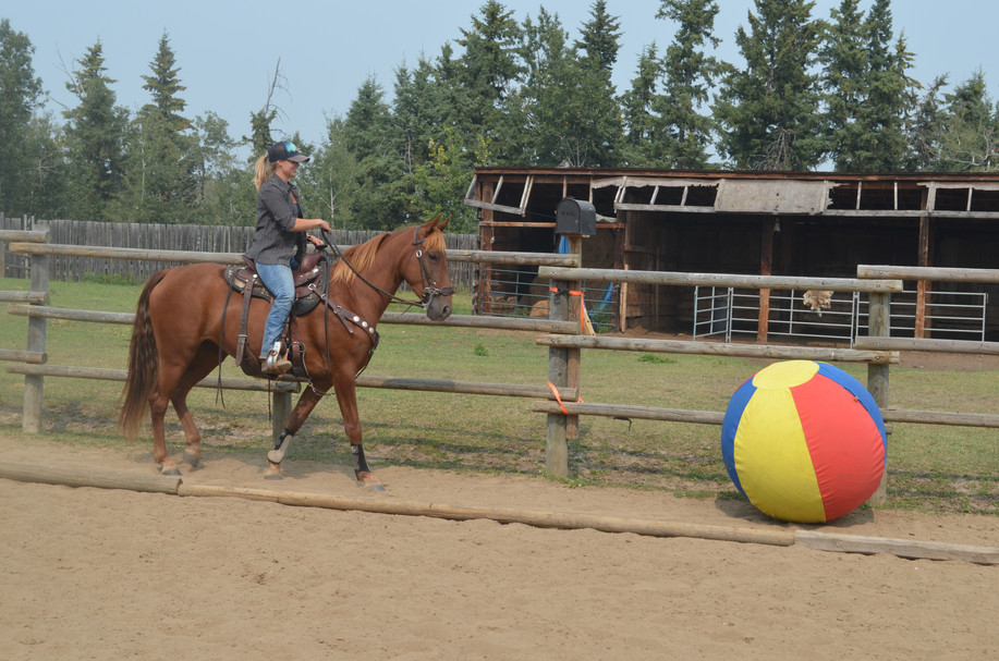 Amazing Horse Country Clinic