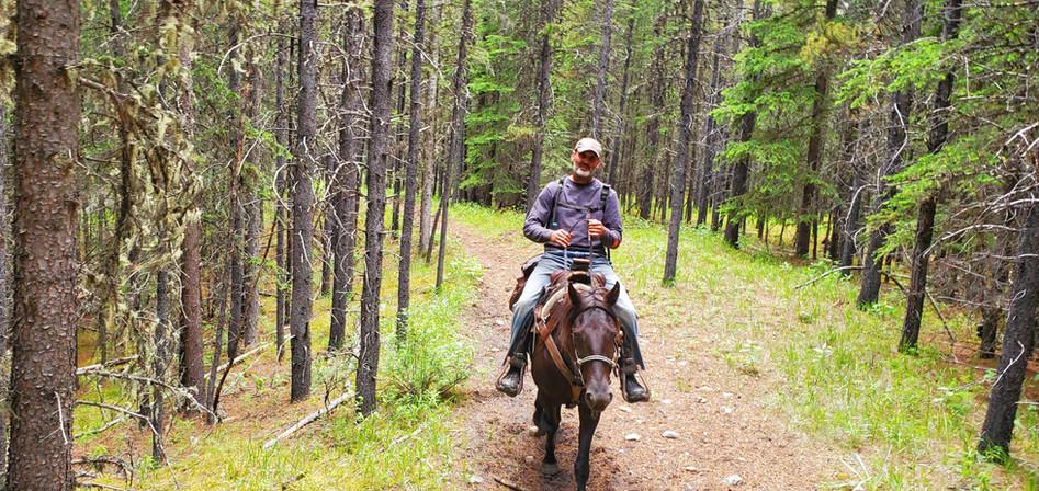Mocha exploring the Wagon Trail