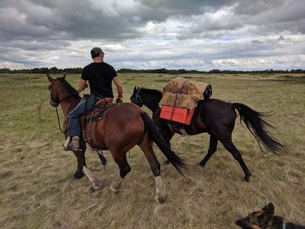 Training a new pack horse