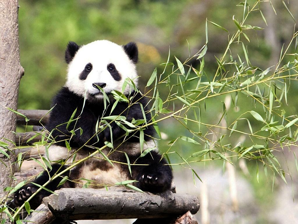 Panda Park