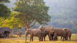 618_348_the-tim-tebow-short-list-elephant-rides