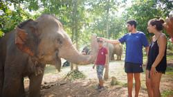 大象志愿者