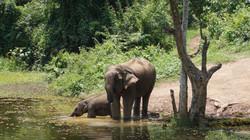大象&小象