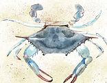 blue crab.jpeg