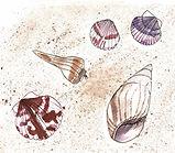 seashells.jpeg