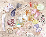 seashells 2.jpeg