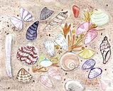 seashells 2.jpeg