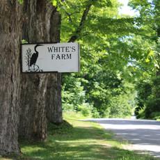 White's Farm