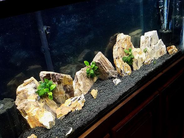 Rooted Tanks Planted Aquarium Rock
