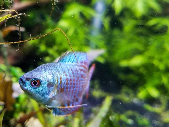 Rooted Tanks Planted Aquarium Fish