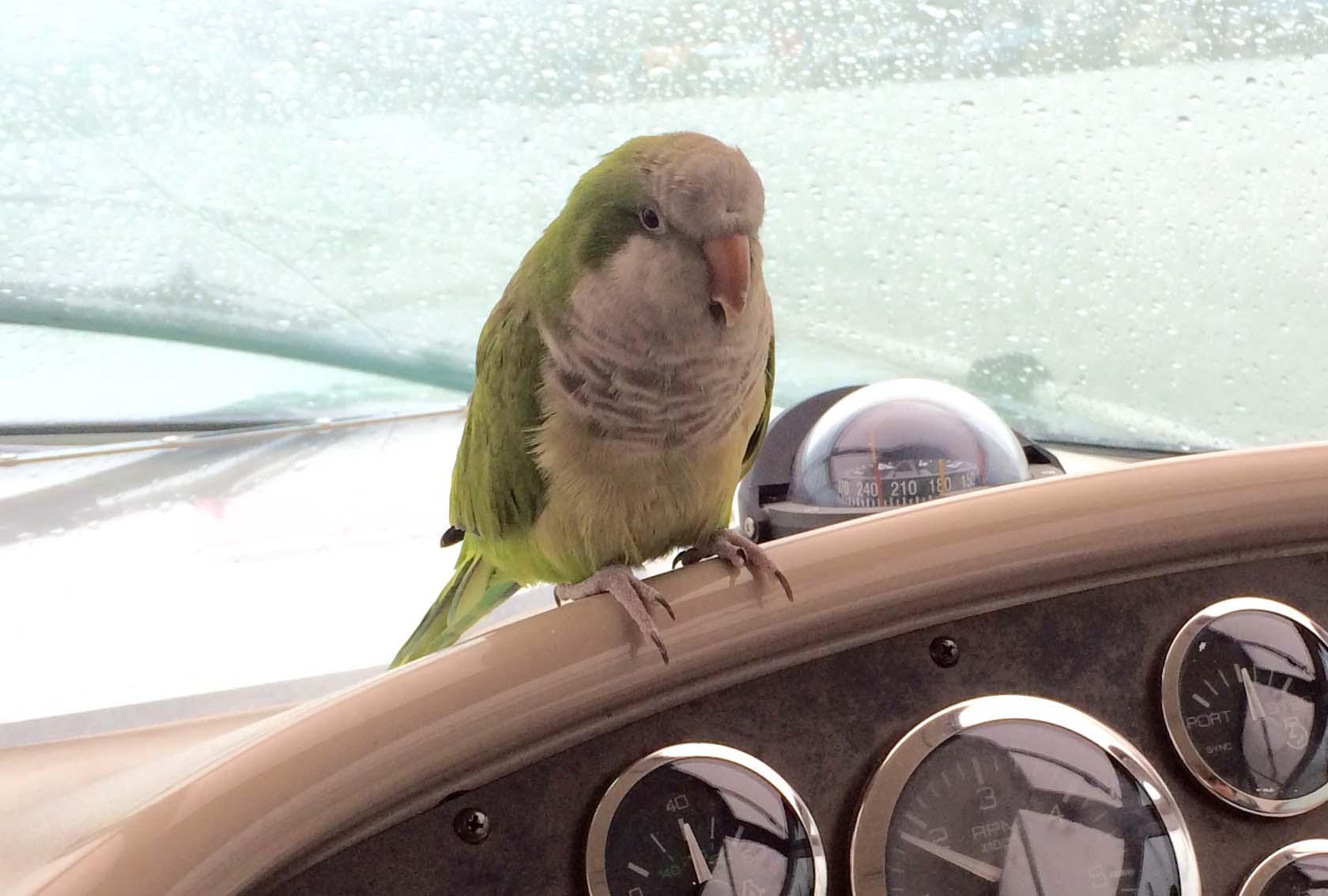 Rico Navigating