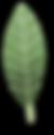 Leaf_02.png