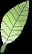 Leaf_01.png