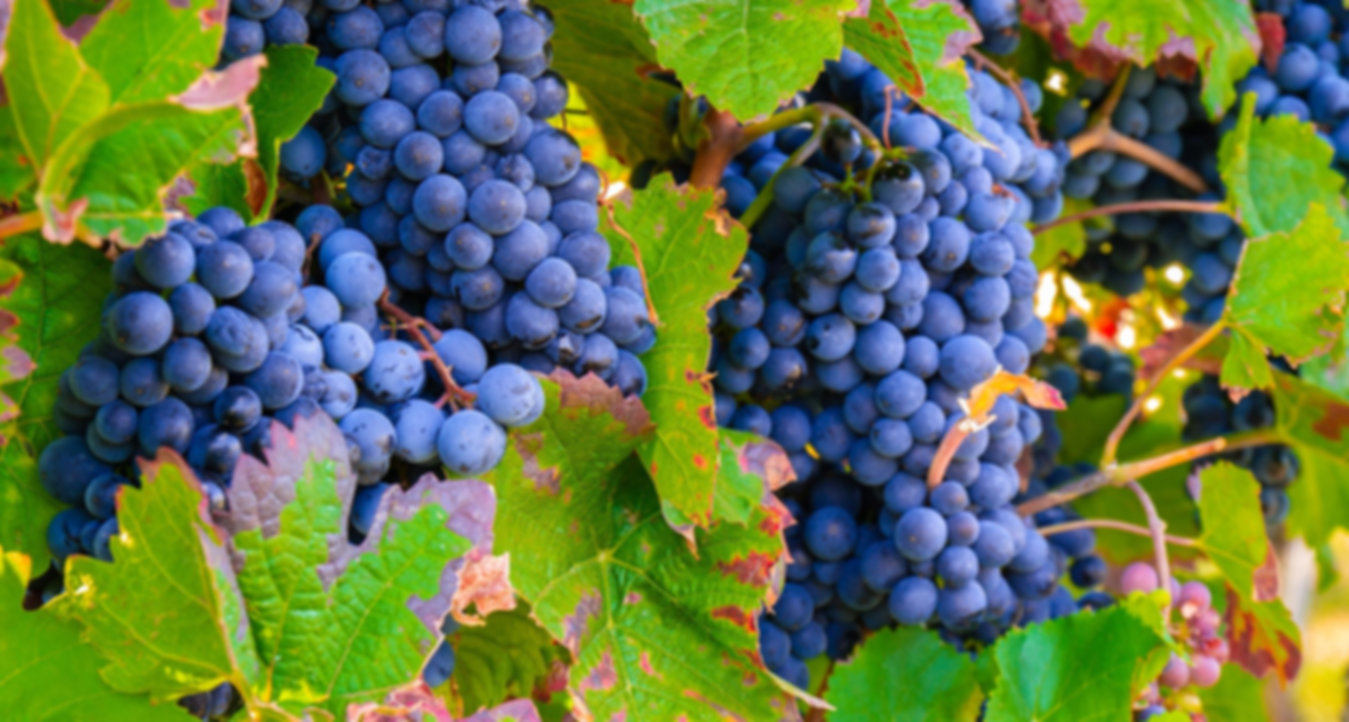 grapes-3680486_1920.jpg