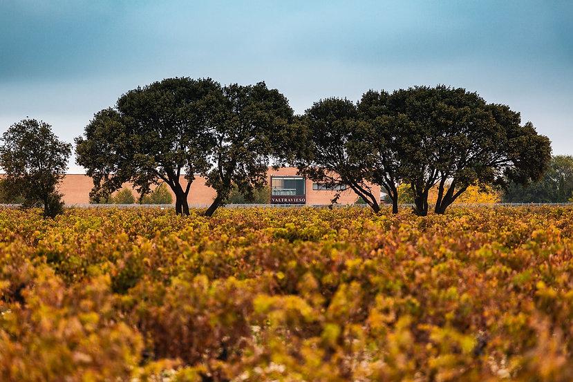 Gran Valtravieso vino (Bodega) - GastroS