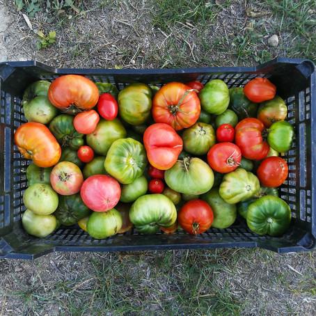Los beneficios de una alimentación ecológica
