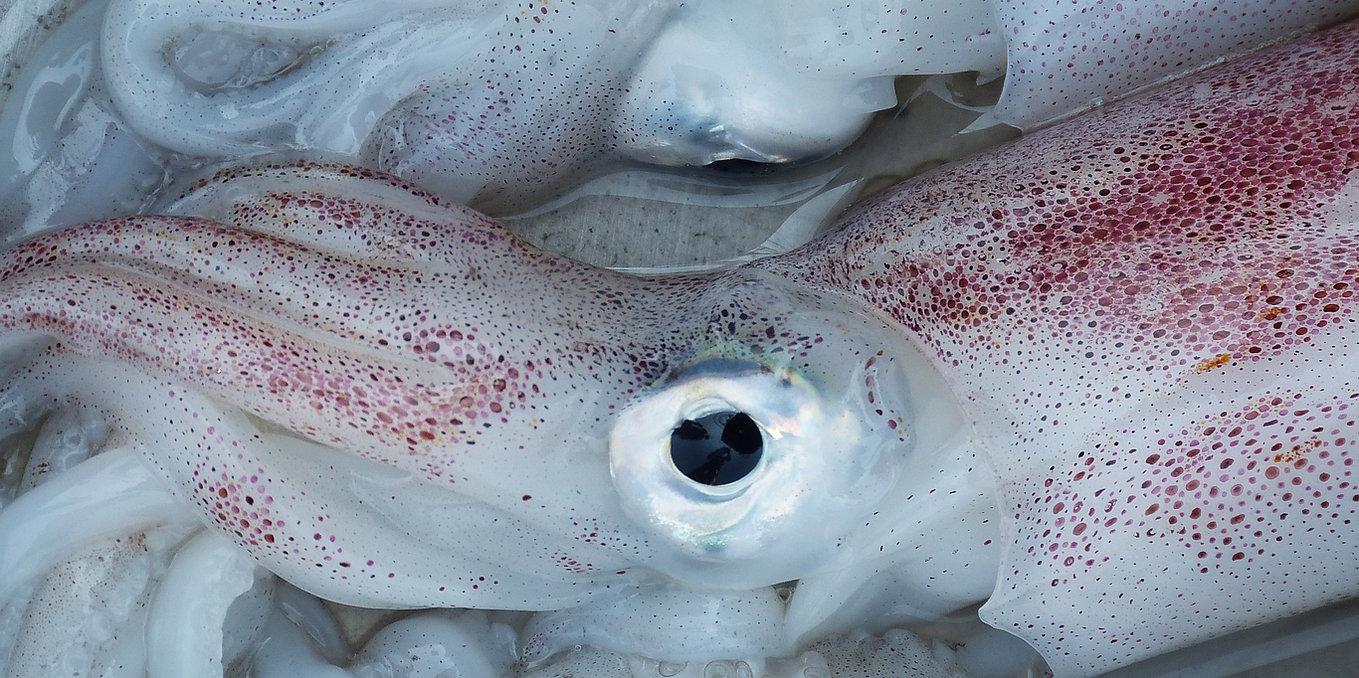 Portada (Mejores pescaderías) - GastroMadrid