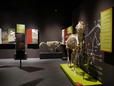 Lipikum Museum