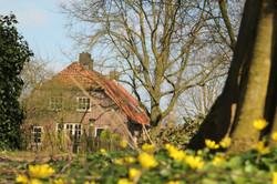 Bed and Breakfast - Theetuin Green Cottage in de bloei
