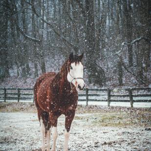 Sugar-snow-pose.jpg