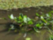 スクリーンショット 2020-05-27 17.02.47.png