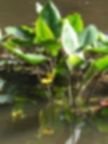 スクリーンショット 2020-05-27 17.03.10.png