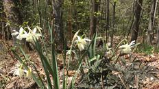 Berkshire Garden Style - Into Spring