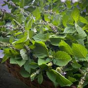 August 2021: The Wild - Revisiting Berkshire Garden Style
