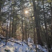 Berkshire Garden Style - Savoring the Snow Cover