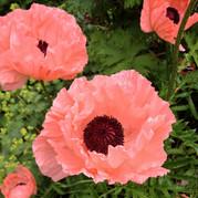 Berkshire Garden Style: Because it's June! June! June!