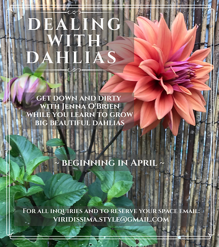 Copy of dahlia_promo_webpage(1).png