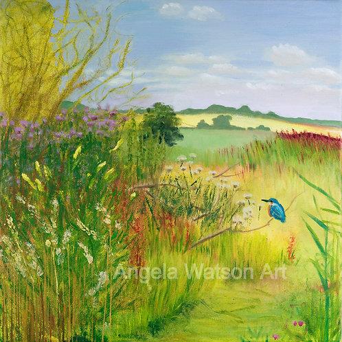 Kingfisher, Sharpham, Somerset