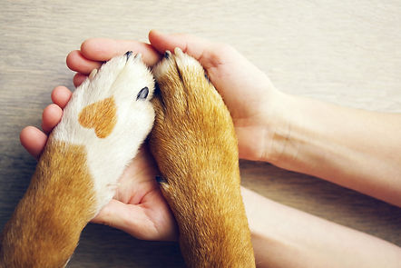 pet love.jpg