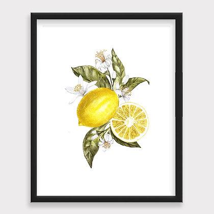 Limón Sketch Vintage Art Print