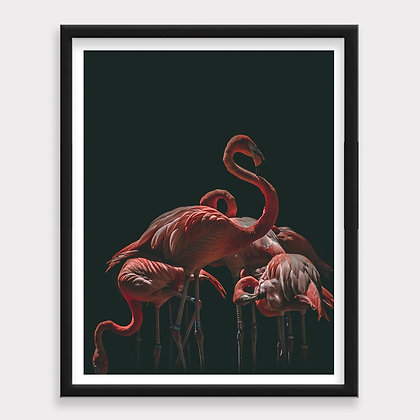 Flamingo Animales Claroscuro Art Print