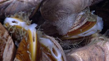 hydrate-on-mussel-seeps-4-600.jpg