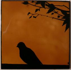 l'ombre du pigeon