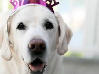Bella's 14th Birthday -