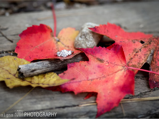 A FALL ENGAGEMENT SESSION