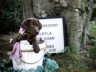 Introducing...Layla