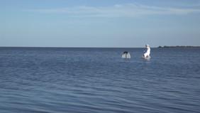 L'île en l'eau Pierre Richard - extrait du spectacle Le Petit éloge de la nuit.mov