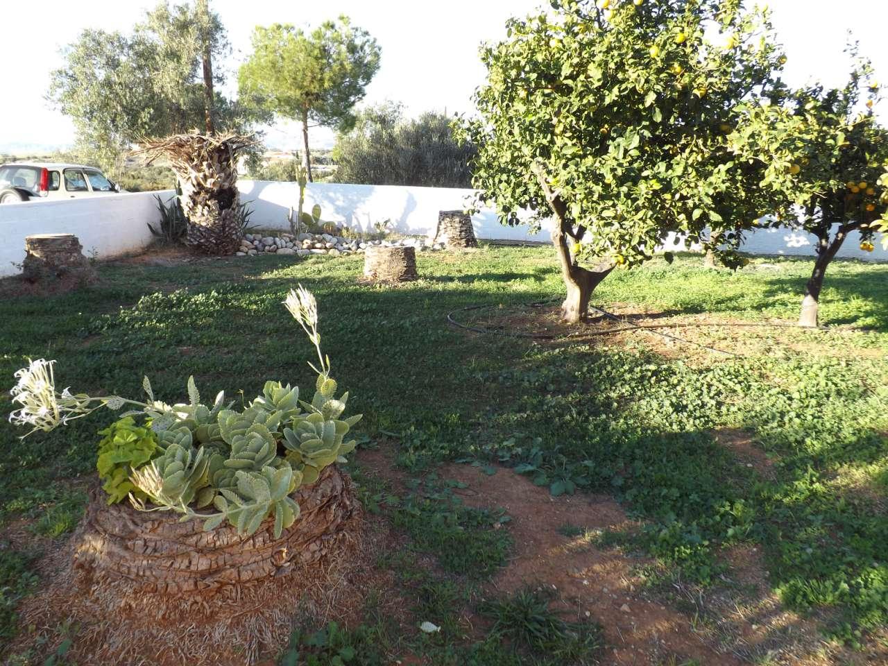 Side Garden / Plot