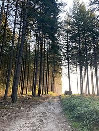 randonnée et resourcement au coeur de la nature en bourgogne