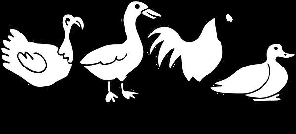 poulet dinde@4x.png