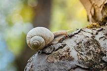 snail-1606045_1920.jpg