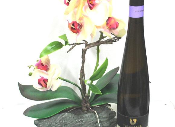 סחלב יין ופרלינים