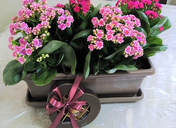 אדנית עם פרחים